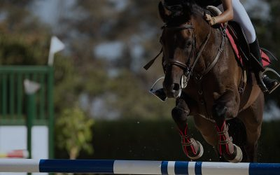 Warmup for Baltic Cup – Mustang Cup and Regional Horse Show